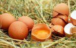 Как куриное яйцо поможет сбросить лишний вес?